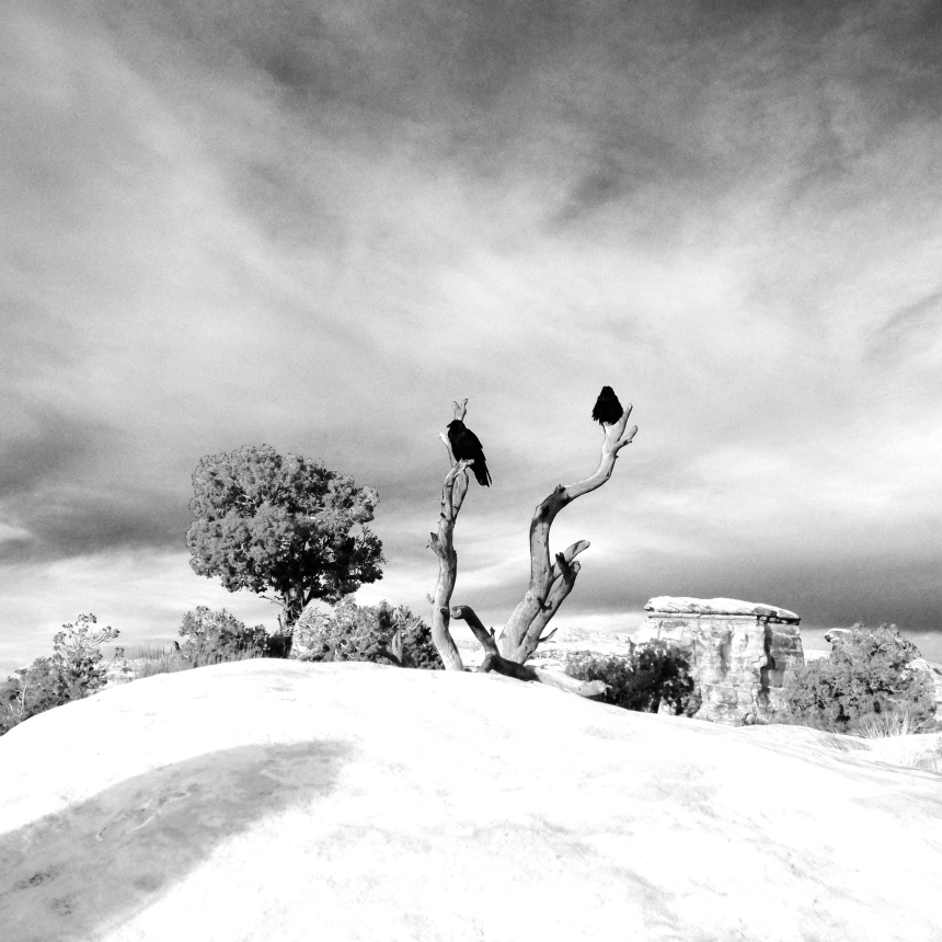 Black Birds, digital photo,  Canyonlands NP.  dylanjohnart.com